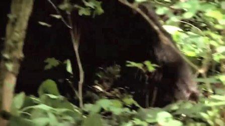 森林原住民?!
