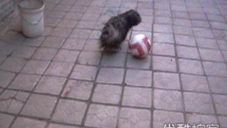 【拍客】超萌狗狗踢足球
