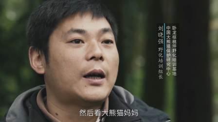 中俄合拍大型纪录片《这里是中国 第1集 国宝大熊猫》2018 第1季全6集 汉语中字 4K