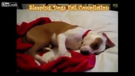 可爱狗狗睡觉做梦合集 搞笑视频