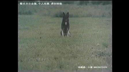 警犬卡尔全集第一集片段