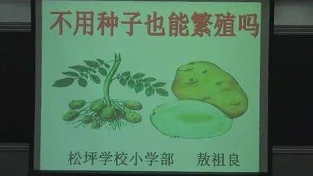 小学五年级科学《不用种子也能繁殖吗》教学视频熬祖良