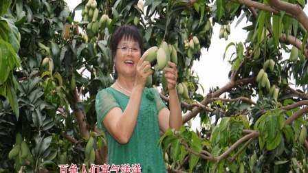 百色田阳芒果熟了《百色芒果香》