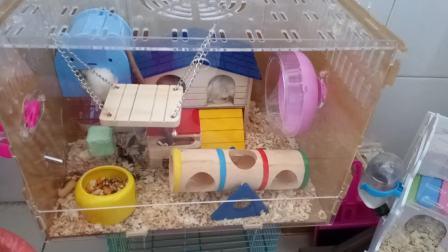 给仓鼠们换了个大别墅,各种舒服。