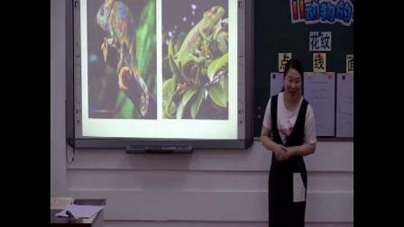 人教版小学三年级美术下册第11课动物的花衣裳-孔老师公开优质晒课配视频课件教案