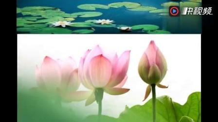 一首佛教歌曲《清心咒》,空灵的天籁之音,升华心灵!静心