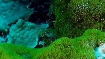 这次给大家介绍印尼蓝梦岛