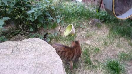 Bessy-Brigit Kittens 080910