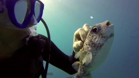 潜水员为箱豚按摩