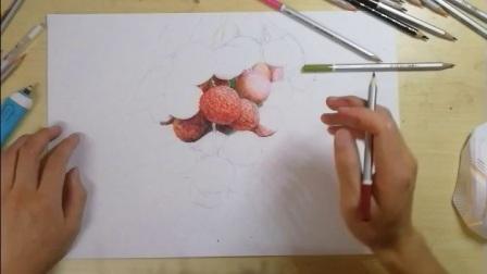 手绘彩铅写实荔枝