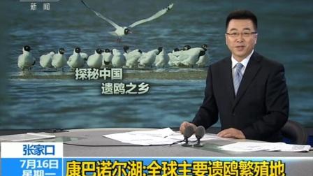 张家口·康巴诺尔湖:全球主要遗鸥繁殖地 180716