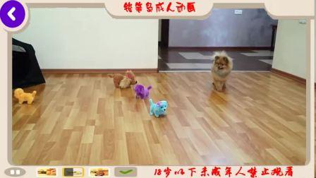 有趣的小宝贝玩耍时间五可爱的小狗小狗跳