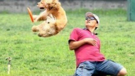 大狗怎么训练 训练狗狗要多少钱 贵宾犬怎么训练站立