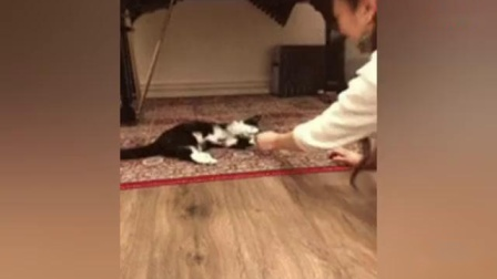 超可爱喵星人搞笑视频 宠物猫咪成精第二期
