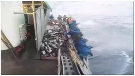 《你没见过的钓鱼比赛》
