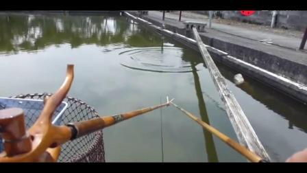 钓鱼视频: 钓鱼, 小钓竿, 钓大鲤鱼