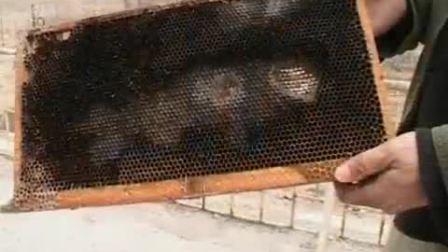02蜜蜂养殖技术二