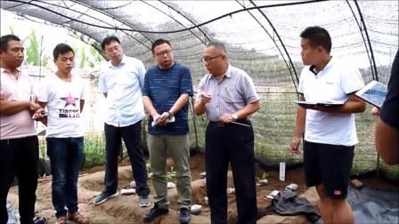 贾乾义:羊肚菌的精细化管理