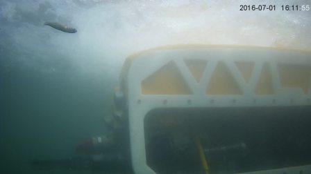 山东未来机器人有限公司——VVL1000水下风光