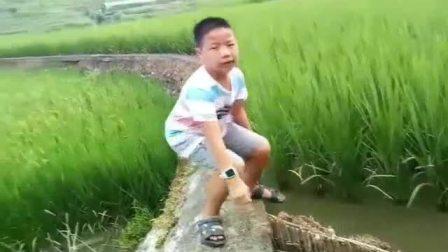 我的家乡—稻田鱼基地—清远盛兴中英文学校+房毅鹏