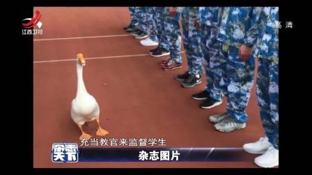 杂志图片:网红大白鹅 杂志天下 180904
