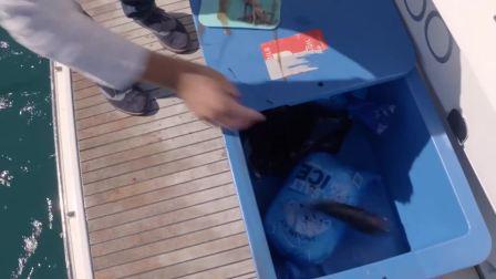 第二集NC14 新西兰海钓特别节目FISH OF THE DAY