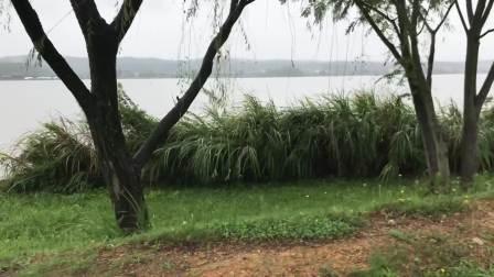 【日本国内游、石川县小松市】在下雨天,从木场潟(泻)的北园地附近~西园地~南园地骑车兜风儿