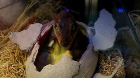 【哈福玩具】恐龙知识大百科—恐龙宝宝是怎么来的