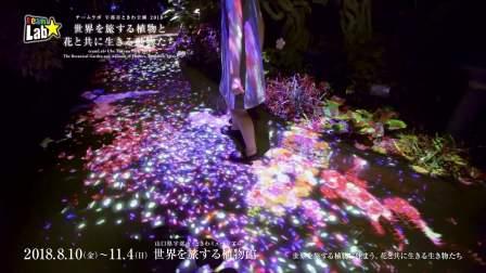 teamLab: Ube Tokiwa Park 2018