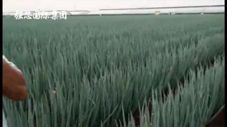 摩卡素桶肥系列之洋葱