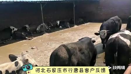 天津九州大地饲料有限公司肉牛客户实证 (1)