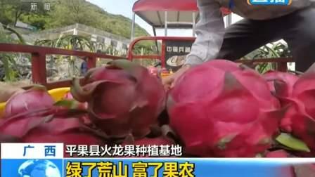 广西平果县火龙果种植基地 绿了荒山 富了果农 180918