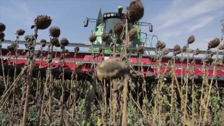 Capello公司葵花籽割台配迪尔收割机