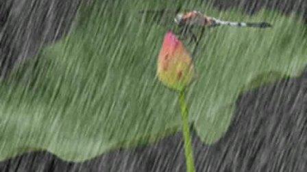 萨克斯演奏春雨
