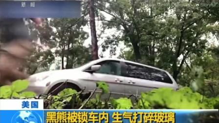 美国:黑熊被锁车内 生气打碎玻璃 180920