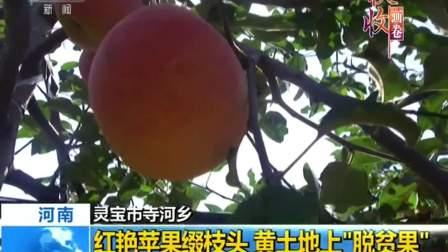 """河南灵宝市寺河乡:红艳苹果缀枝头 黄土地上""""脱贫果"""" 180923"""