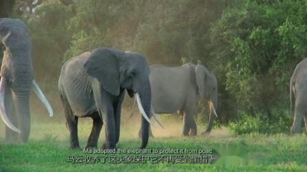 阿里云携手肯尼亚政府,用IoT技术保护非洲大象