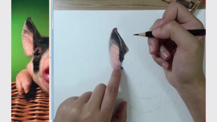 彩铅手绘 宠物猪(上)
