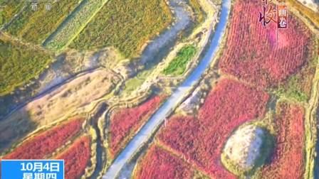 柴达木盆地海西蒙古族藏族自治州 聚宝盆里 红红火火收藜麦 181004