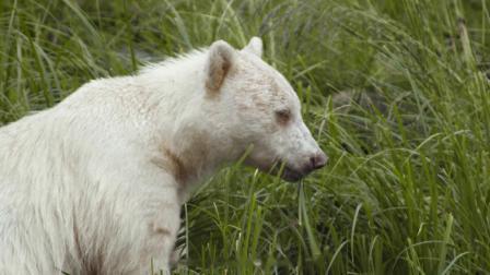 大熊雨林:对话最原始自然中的生灵.