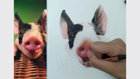 彩铅手绘 宠物猪(下)