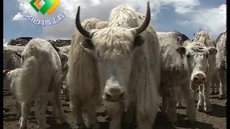 地方牛品种介绍(下)