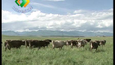 新疆褐牛养殖技术(下)