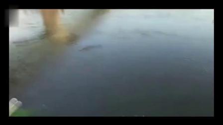 民间牛人挑战野生鳄鱼精彩一瞬间,相机正好记录
