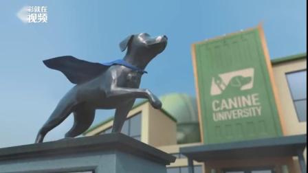 """国外导盲犬组织短片《Pip》,讲述一只""""笨笨""""小狗想努力成为合格的导盲犬的的励志故事。又窝心又萌趣!"""