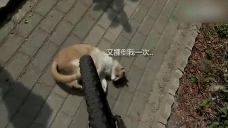奇闻趣事路遇碰瓷猫,看这些碰瓷的,真是越来