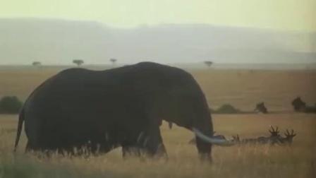 电影《走出非洲》主题音乐