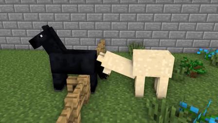 我的世界动画-怪物学院 vs 动物园-MAXIM