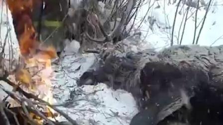 拯救麋鹿,好感动啊