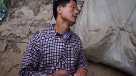 中国农科院研究员张淑香老师参观中草药制剂套餐的黄瓜效果